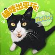 Taiwan Cute Cats!