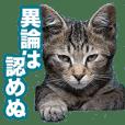 猫生 写真スタンプ 01