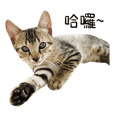 Meow Meow Living Diary