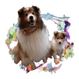 Beatrice and Luce the Shelties Sticker