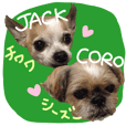 Jack&Coro For chihuahua & shihtzu lover!