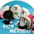 Pekingese daily conversation sticker