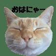 白桃猫猫1