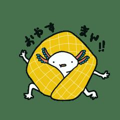 ウーパールーパー白多め
