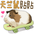 Cute guinea pig(with words)