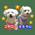 マルプーのコタ&モモ