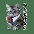 猫カフェラグドール猫スタッフスタンプ1