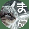 Matchanchi's Halo-san