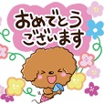 Toy poodle and flowers