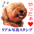 This is a dog photo sticker.