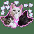 Purr meow