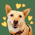 台灣米克斯犬 Mix Dog「Ticket」