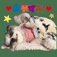 Real DOG Chihuahua MU-