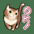 Speak with Cats Sticker English ver.