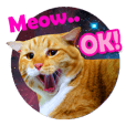 Meow Galaxy (English Version)
