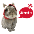 Kinoco rabbit