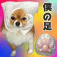 愛犬マロンの肉球【写真】