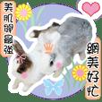肉圓兔和貢丸兔