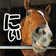 Horseface (Face of a horse) picture. -2-