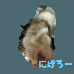 Tomoko_20210209191823