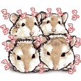 hamster ginji3