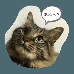 TOMOKO_20210210143337