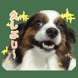 パピヨン♡チャオス