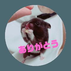 tomoko_20210213223523
