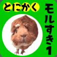 guinea pigs love01