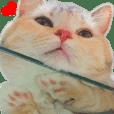 顔デカ短足猫 パート2