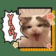 ひのき猫デコレーションスタンプ
