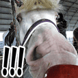 Horseface (Face of a horse) picture -3-