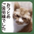 Cat's CHAME-ZO