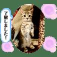 puppyland_cherrie2021.2.14