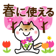 Spring of slowly cat