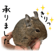 Degu pattern Stickers OT