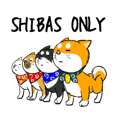 SHIBAS ONLY