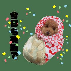 トイプードルアロンつぶやき編