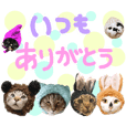 awajishima cat4
