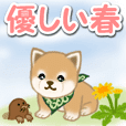 Puppy of Mameshiba in spring