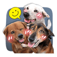 Dogs Leela(English ver.)