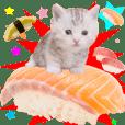 Cat sushi manchi