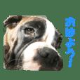 Riesen Stern Boxer(ボクサー犬スタンプ)