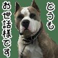 KING ASH ふぁみり~!