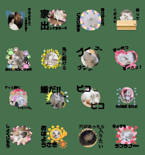 「白うさぎの日常・いくらちゴ」のLINEスタンプ一覧