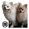 pomeranian Leo and max 4 'SEKI' uses it