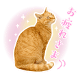 Sticker for help cats greeting Sanosuke