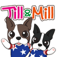 Boston terrier Jill&Mill