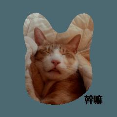 貓丸的日常