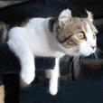 猫たち集めてみました
